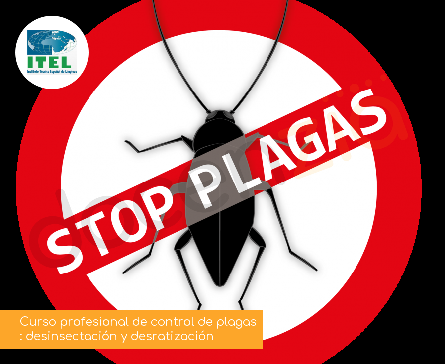 Curso profesional de control de plagas: desinsectación y desratización