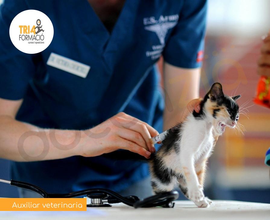Auxiliar veterinaria